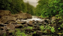 River Nature Paysage Forest Stones Cool Wallpapers